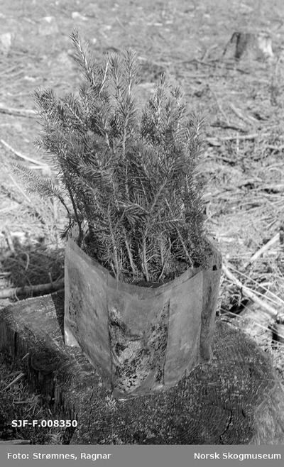 «Skogkulturforsøk på Gardermoen 1974.»«Torvbrikettplanter (pottebelteplanter) 2 år i rull.»