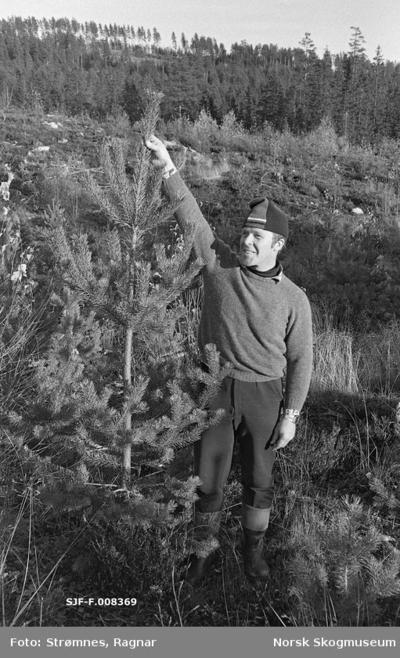 «1/0: Dekkrotplanter i pottebrett.»«Forsøksfelt i Hurdal (Eidsvoll p.g.skog). Markberedt og plantet våren 1972. Bilde: nov. 1978»
