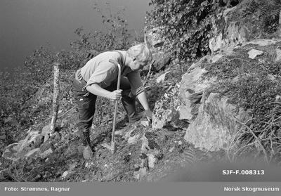 «Studier av planting i vinsjfelt i Brakandalen ca. 20. aug. 1979»