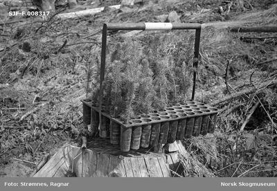 «Studier av planting og markberedning i Eidsvoll p. g. skog juni 1979»
