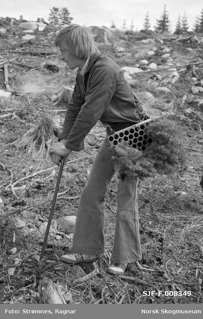«Pottebrett M-95 bæres i hoftemeis. Odd Lundberg.»«Planting pluggplanter. Eidsvoll p.g.skog, Hurdal, juni 1977.»