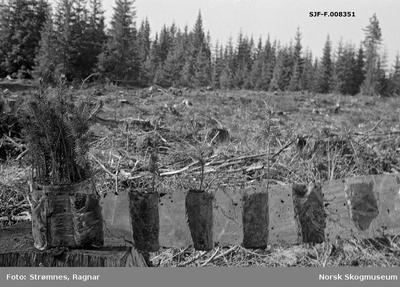 «Skogkulturforsøk på Gardermoen 1974.»«Torvbrikettplanter utrullet.»