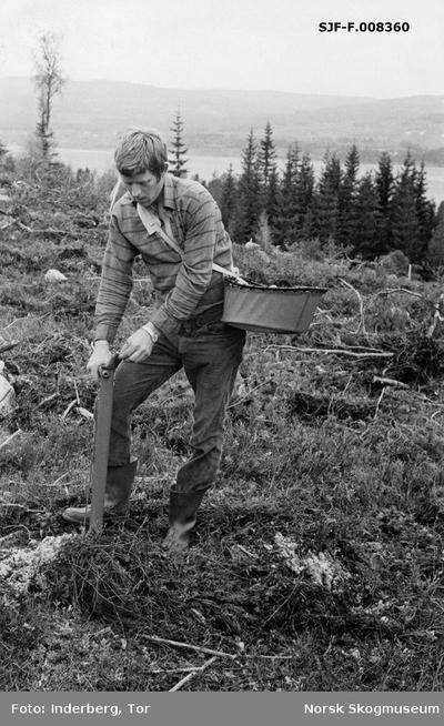 «Planteforsøk Hurdal mai 1973. Markberedet mark. Planterør, papirpotteplanter»