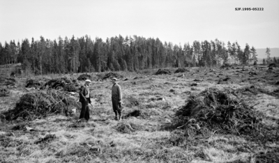 Ryddet hogstflate i Hverven skog i Norderhov på Ringerike