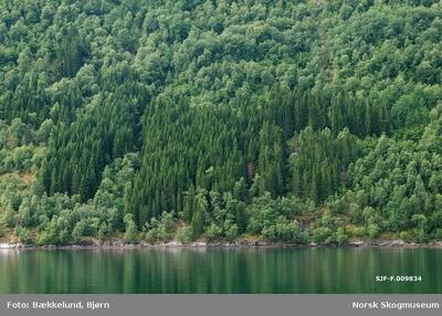 Skog ved Svora