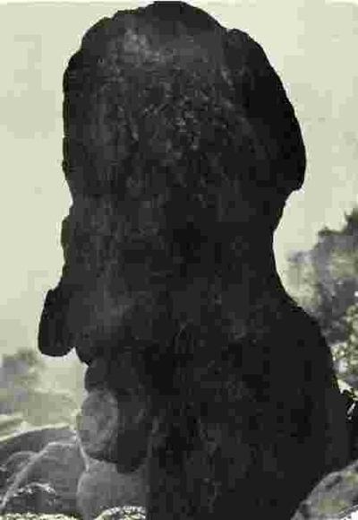 Beisfjordgubben