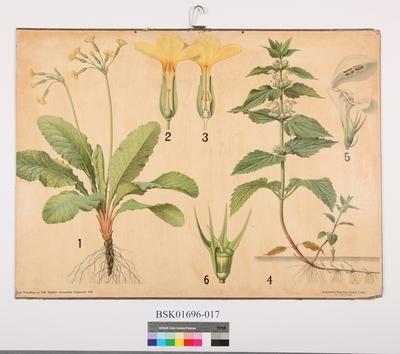 Botaniske Vægtavler XIII