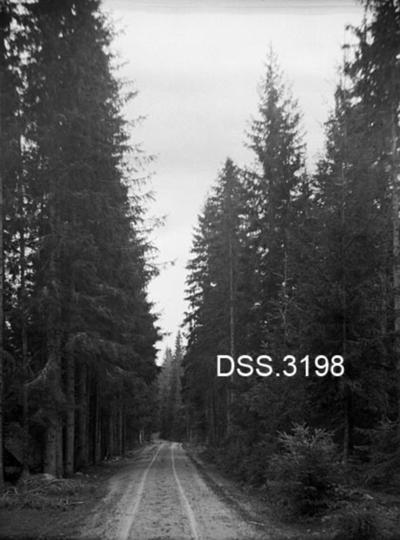Veg omgitt av granskog i Eidsvoll prestegardsskog