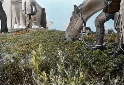 Fra foredragsrekken Landmålerlivet i Finnmark v/Axel Printz : Kløvhesten Rolf