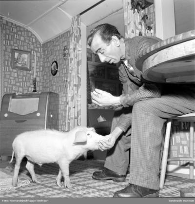Den romske mannen Columbus med sin åtta månaders tama gris