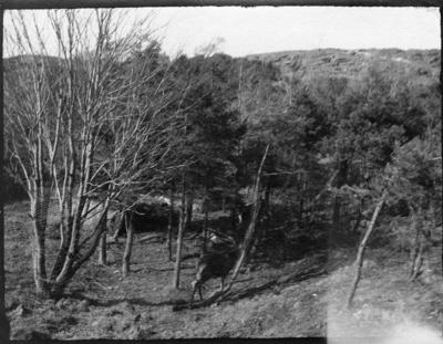 'Bilder från Slottsskogen. ::  :: Djurhage med hjortdjur.'