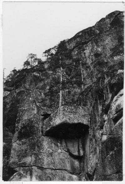 'Bildtext: ''Skogbeväxt bergvägg.'' Närbild på tall växande på klippavsats på bergvägg. ::  :: Fotonr. 7046:1-84 indelade som ''Landskapsbilder från Göteborgs- och Bohus län.'' Ingår i serie med fotonr. 7046:1-383, 7047:1-33 och 7048:1-67 med bilder från  Länsjägmästare John Lindners bildarkiv.'