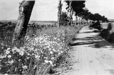 Vägen Åsle - Tiarp. Utmed Gerumsbergets västra sluttning.