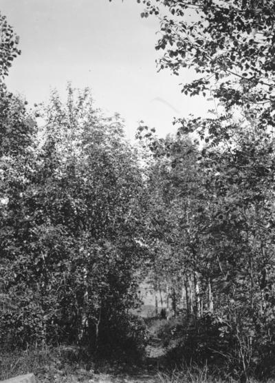 Gångstig vid jaktslottet. År 1906.