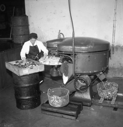Gävlefisk, rensningsmaskin. Den 9 juni