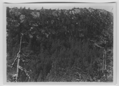 'Berget med pilgrimsfalkboet i bergsbranten, mitt i bilden, vy med berg med björkskog nedanför och tall på toppen. ::  :: Se serie med fotonr. 3151-3200, se särskilt nr. :: 3157-3168. Se även fotonr. 1771-1837.'