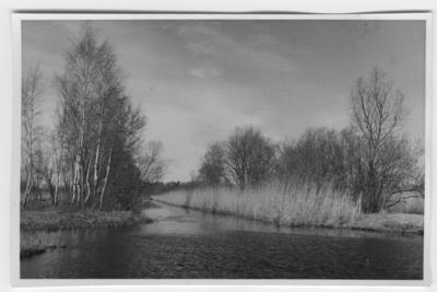 'Strandbild från Oset. Kanal med vass. Dunge med björkar i förgrunden intill kanalen. ::  :: Ingår i serie med fotonr. 4389-4392.'