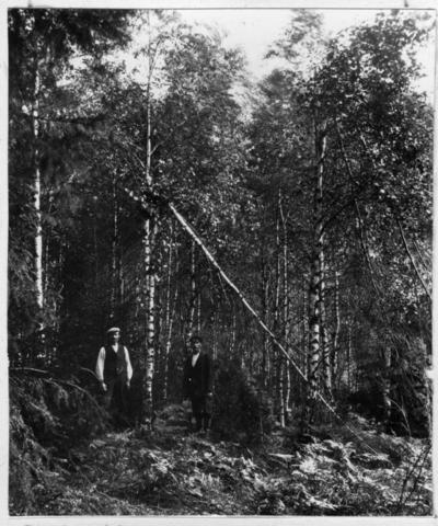 'Bildtext: ''Snöbrott.'' 2 män stående invid björkbestånd där vissa träd knäckts av snötyngd. ::  :: Fotonr. 7047:2-23 indelad under rubriken ''Atmosfäriska skador på skogen, skogseld och släckning därav.'' Ingår i serie med fotonr. 7046:1-383, 7047:1-33 och 7048:1-67 med bilder från  Länsjägmästare John Lindners bildarkiv.'