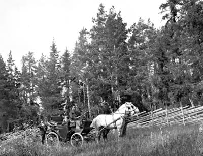 På väg till fäboden. År 1906.