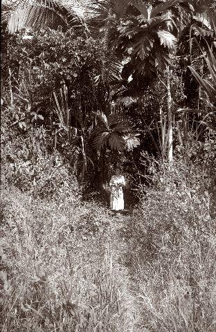 Margit Karsten keräilemässä kasveja