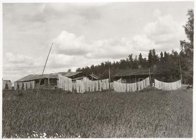 pellavalankaa valkaistaan Tammelan Kaukolassa