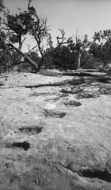 Wetherill's mesa, Mountain Sheep Canyon (Rock C.). Rauniolle 16 johtavat kallioon hakatut portaat mesan laella. Taustalla kitukasvuisia havupuita