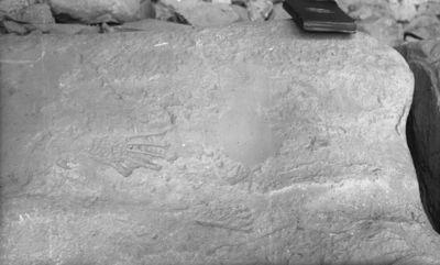 Chapin's mesa, Johnson Canyon. Kalliopiirros Johnson Canyonissa. Linnunsiipiä muistuttavia kuvioita kalliossa (kivettymiä?). Kallion päällä tummakantinen muistikirja