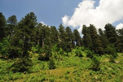 Δάσος κωνοφόρων
