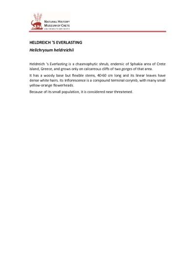 Helichrysum heldreichii