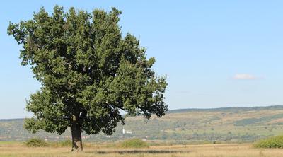 Landscape of Nușfalău