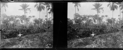 Végétation avec Palmes, Afrique de l'Ouest #1534