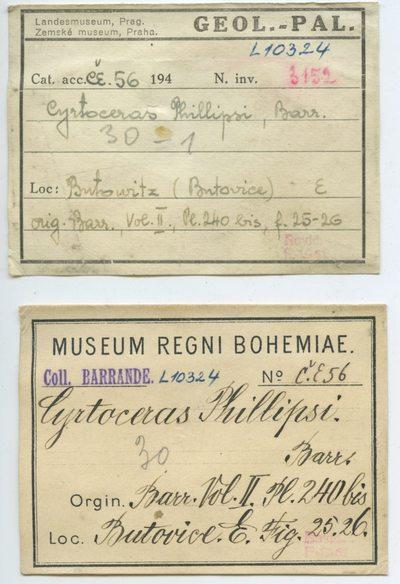 Cyrtoceras phillipsi Barrande