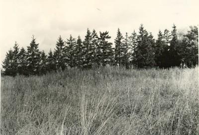 Kalmistu Surnumägi