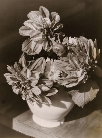 Blumenstillleben (Kaktusdahlien)