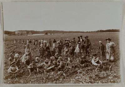 Frauen und Kinder arbeiten auf einem Zuckerrübenfeld