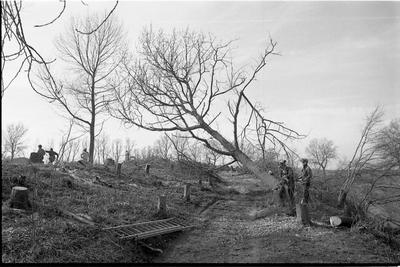 Brouwershaven. Noordwal en Zuidwal. In opdracht van de gemeente Brouwershaven worden alle bomen en struiken op de stadswallen verwijderd. Uit onderzoek blijkt dat negentig procent van het groen is aangetast door bacterievuur of iepziekte.