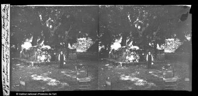 Frêne au sommet de Monte Cavo et soubassement du temple de Jupiter