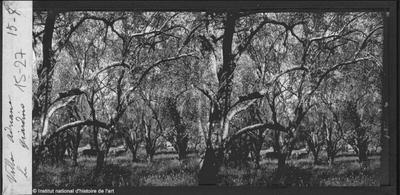 [Tivoli] Villa Adriana. Le giardino