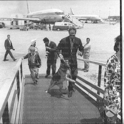 Charlton Heston con il cane al guinzaglio sale sull'aeroporto di Fiumicino seguito dal figlio e più indietro dalla moglie - campo medio
