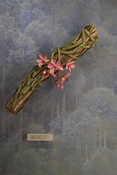 Kingidium taeniale (Modell: Assimilationswurzeln Bandförmige Spießorchidee (3:1))