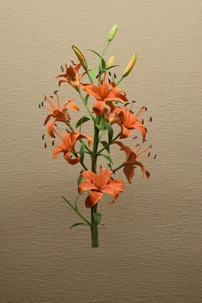 Lilium bulbiferum (Modell Traube der Feuerlilie (Blütenstandsmodell 1:1))