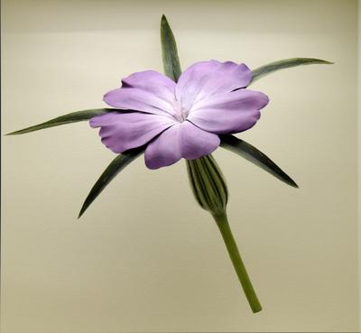 Agrostemma githago (Modell Blüte einer Kornrade (10:1))
