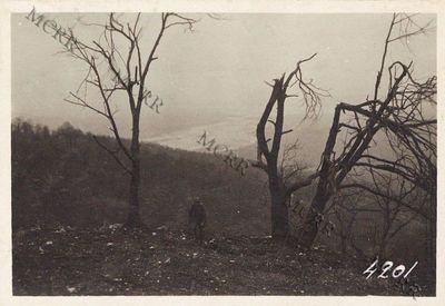 Il Piave visto dal monte Tomba