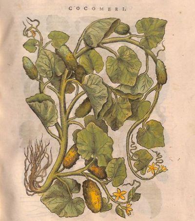 Cocomeri