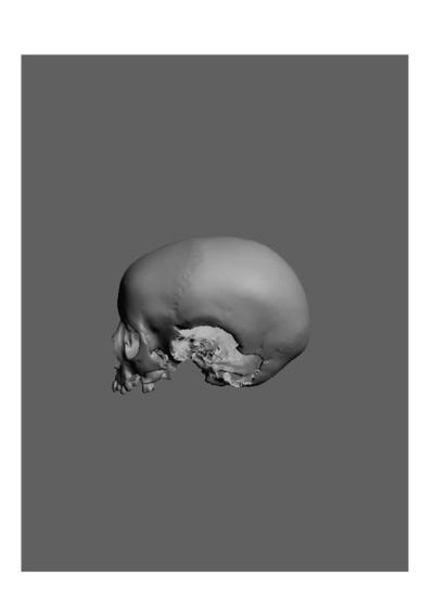 Crânio humano de uma criança do sexo masculino, com número de colecção 19 da colecção de Antropologia Luís Lopes, do Museu Nacional de História Natural e da Ciência, Lisboa, Portugal.
