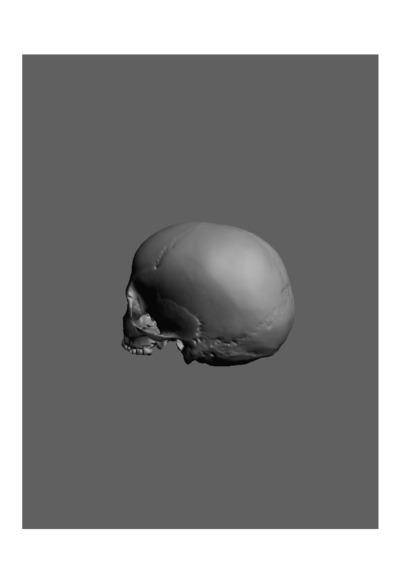 Crânio humano de uma jovem adulta do sexo feminino, com número de colecção 1673 da colecção de Antropologia Luís Lopes, do Museu Nacional de História Natural e da Ciência, Lisboa, Portugal.