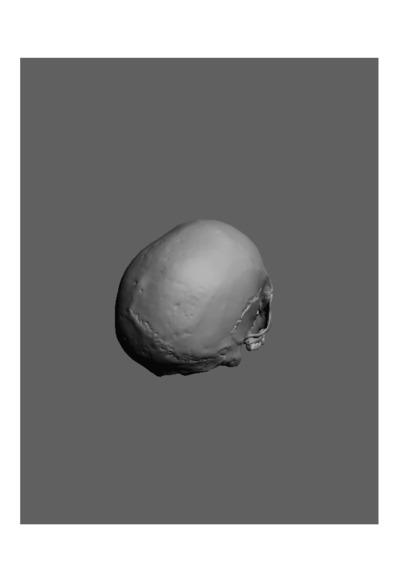 Crânio humano de um jovem adulto do sexo masculino, com número de colecção 1674 da colecção de Antropologia Luís Lopes, do Museu Nacional de História Natural e da Ciência, Lisboa, Portugal.