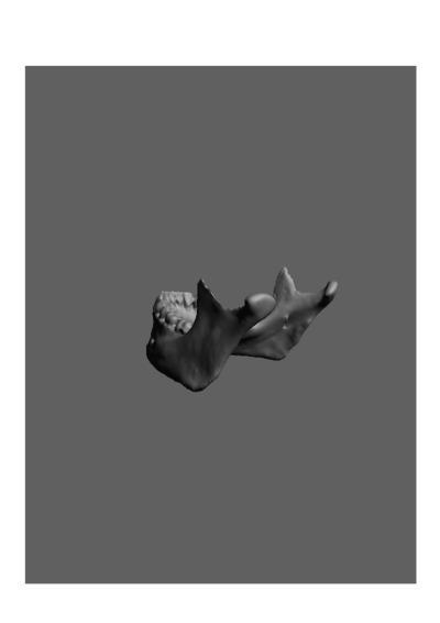 Mandibula humana de um jovem adulto do sexo masculino, com número de colecção 1674 da colecção de Antropologia Luís Lopes, do Museu Nacional de História Natural e da Ciência, Lisboa, Portugal.