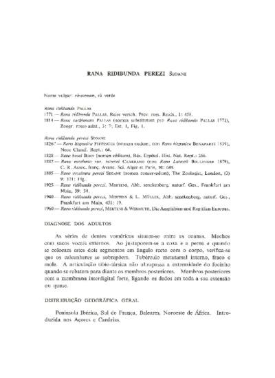 Pelophylax perezi (López-Seoane, 1885)