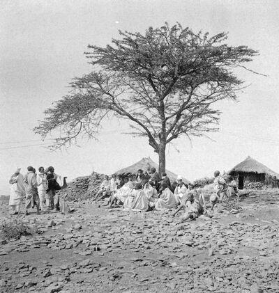 Debra Tabor: l'albero di giustizia